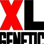 XL Genetic - Java freelancer Asturias